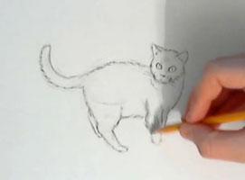Jak nauczyć się rysować #9 - rysowanie kota
