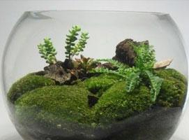 Jak zrobić terrarium z akwarium