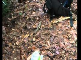 Jak zrobić śpiwór z naturalnych rzeczy znalezionych w lesie