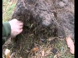 Jak zbudować schronienie w lesie i jak rozpalić ognisko