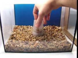 Jak prawidłowo usypać podłoże w akwarium
