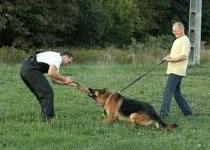Jak poradzić sobie z psem, który ciągnie na smyczy