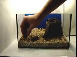 Jak zamontować sprzęt w akwarium