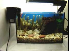 Jak sadzić rośliny trzeciego planu w akwarium