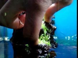Jak sadzić rośliny na kamieniu w akwarium