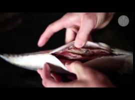 Jak filetować ryby - makrela