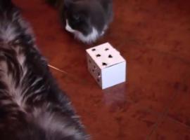 Jak zrobić zabawki dla kotów - 3 pomysły
