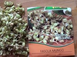 Jak wyhodować kiełki fasoli (i nie tylko) w słoiku