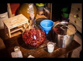 Jak zrobić wino z dzikiej róży cz.1