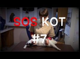 Jak dbać o kota - przytrzymywanie u weterynarza