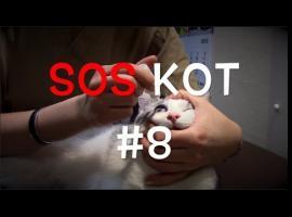 Jak dbać o kota - łzawienie z oczu