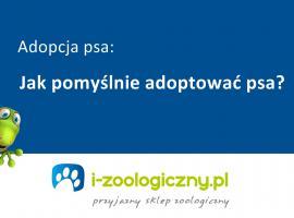 Jakiego psa wybrać dla siebie - adopcja psa i co musisz wiedzieć