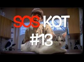 Jak radzić sobie z problemami urologicznymi u kotów #2