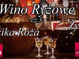 Jak zrobić wino ryżowe cz.3 plus dzika róża plus żyto