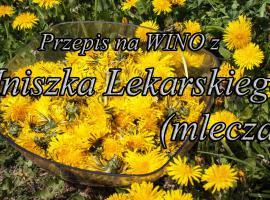 Jak zrobić wino z Mniszka Lekarskiego (Mlecza) cz.1