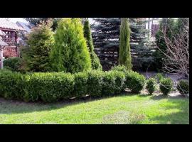 Jak sadzić bukszpan
