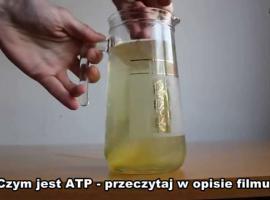 Jak zrobić napój izotoniczny - Izotonik w dwóch wersjach