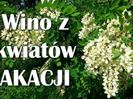 Jak zrobić Wino z kwiatów akacji - wino kwiatowe