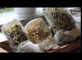 Jak wyhodować kiełki - Zdrowo Gotuję