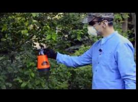 Jak zapobiec robaczywieniu czereśni