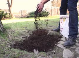 Jak odnowić wydeptany trawnik