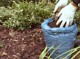 Jak ochronić różę przed mrozem