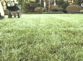 Jak pielęgnować trawnik jesienią