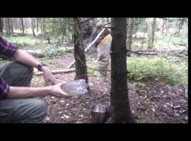 Jak zrobić improwizowany filtr z kory brzozy