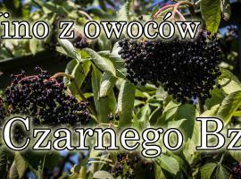 Jak zrobić wino z owoców Czarnego Bzu