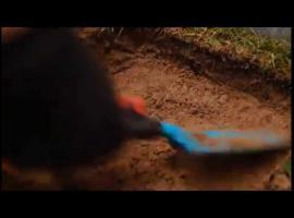 Jak zrobić ścieżkę z płyt chodnikowych w ogrodzie