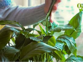 Jak pielęgnować rośliny w mieszkaniu w okresie zimowym