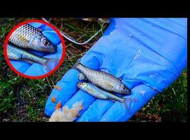 Jak zrobić pułapkę na ryby z butelki