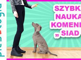 """Jak nauczyć psa komendy """"siad"""" w szybki sposób"""