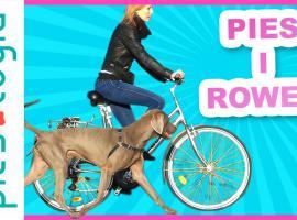 Jak szkolić psa - nauka biegania przy rowerze