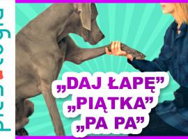 Jak nauczyć psa komend Daj Łapę, Piątka, Pa Pa