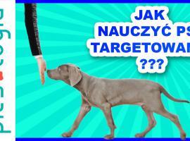 Jak szkolić psa - nauka targetowania