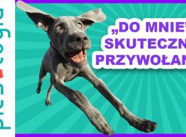 Jak przywołać psa do siebie - szkolenie pupila