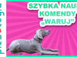 Jak szkolić psa - komenda waruj