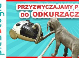 Jak przyzwyczaić psa do odkurzacza