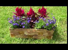 Jak ozdobić balkon lub ogród - doniczka z kobiałki