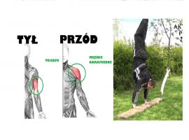 Jak wykonać 3 ćwiczenia na tricepsy i barki bez sprzętu