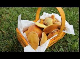 Jak przygotować maślaki duszone na masełku