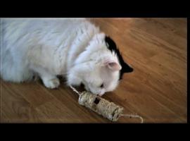 Jak bawić się z kotem - domowe zabawki zrób to sam