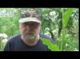 Jak wykorzystać chrzan i do czego go używać