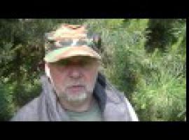 Jak robić syropy z drzew