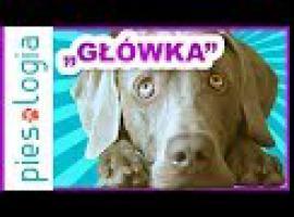 Jak uczyć psa sztuczek - główka