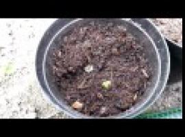 Jak uprawiać warzywa na balkonie - sposób z rurą PCV