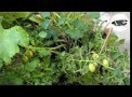 Jak zrobić ogródek w skrzynce