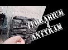 Jak zbudować terrarium z antyram