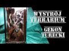 Jak zrobić wystrój terrarium dla Gekona Tureckiego